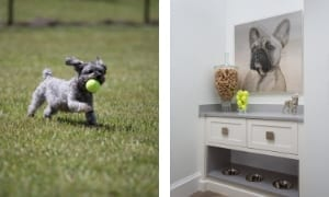 Pet Friendly Home Designs